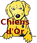 Chiens d'Or !